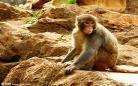 猴子图片大全可爱